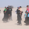 Families from Falluja (UNHCR), refugees, IDPs