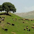Kurdistan Fields (agriculture, sheep, tourism)