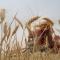 wheat-harvesting-baghdad-may-2012-layth-mahdi-resized