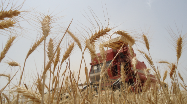 fertiliser | Iraq Business News
