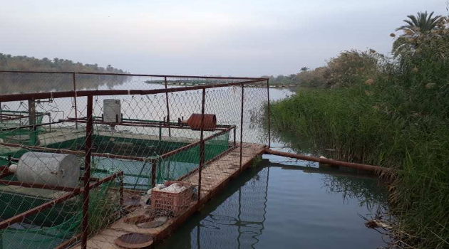 Uncovering a Fish Epidemic that stunned Iraq | Iraq Business